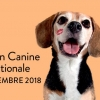 affiche Exposition Canine Internationale